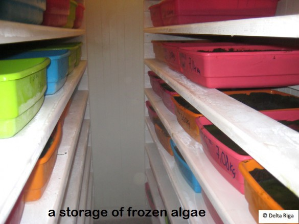 frozen_algae.jpg